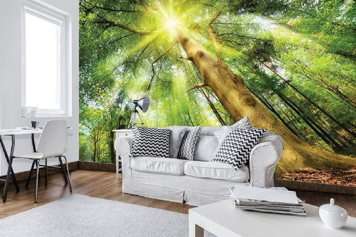 High quality wallpaper murals - Forest sunrise | Homewallmurals Shop